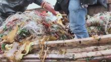 荒野求生之海洋捕捞术