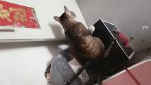 长春猫咪救助站,同城免费领养