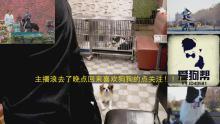宠物狗训养讲解
