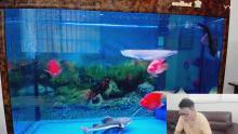 观赏鱼新手养鱼讲解