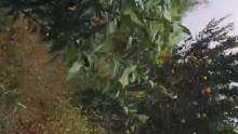 深山冒大雨找虫吃