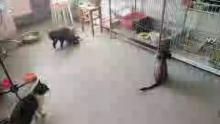 长春喵友爱流浪猫救助,同城免费领养